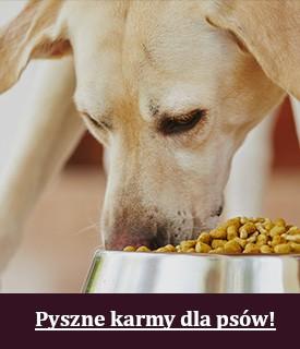 Pyszna karma dla psów